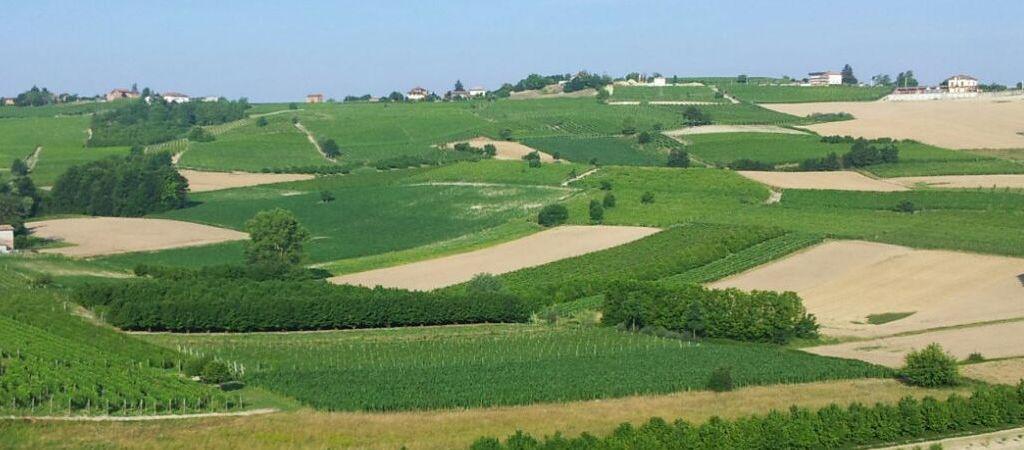 Le colline di Montegrosso d'Asti